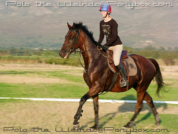 Retraining A Racehorse