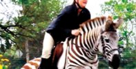 Zack The Show Jumping Zebra