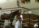 It All Starts Here - A Visit To A Racehorse Auction