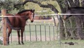 President Signed Bill To Allow Horse Slaughter in the US