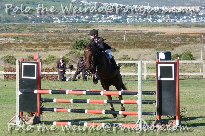 Showjumping Competition With Bronze