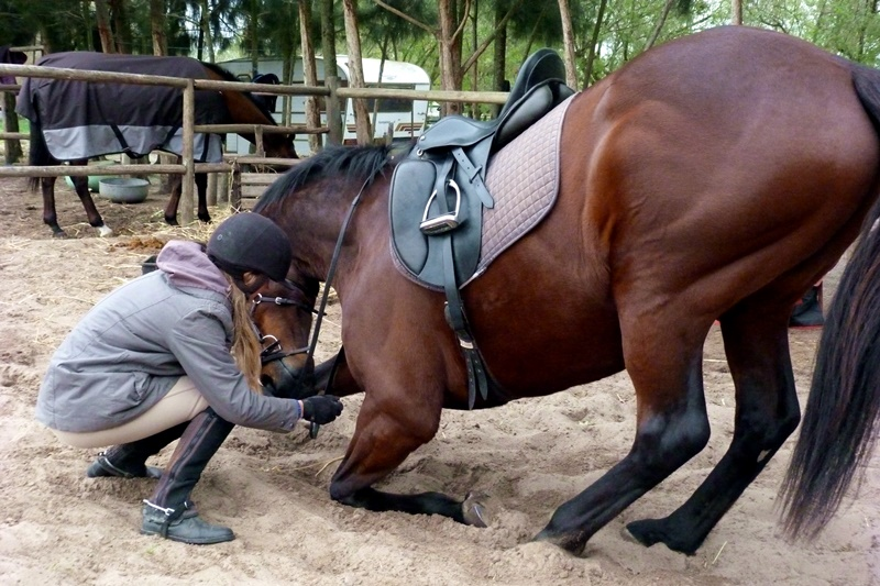 Teach Your Horse to Bow
