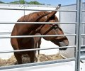 Is the Final End In Sight for Horse Slaughter in the United States
