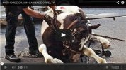 Is it Time To End Horse Drawn Carriages in New York City