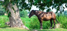 Care and Signs of an Aging Horse