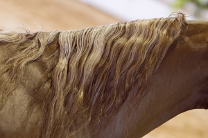 Breaking the Horse Hair Whorl Code