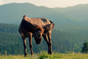 The Kentucky Feral Horse Controversy