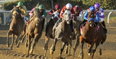What is Next for American Pharoah