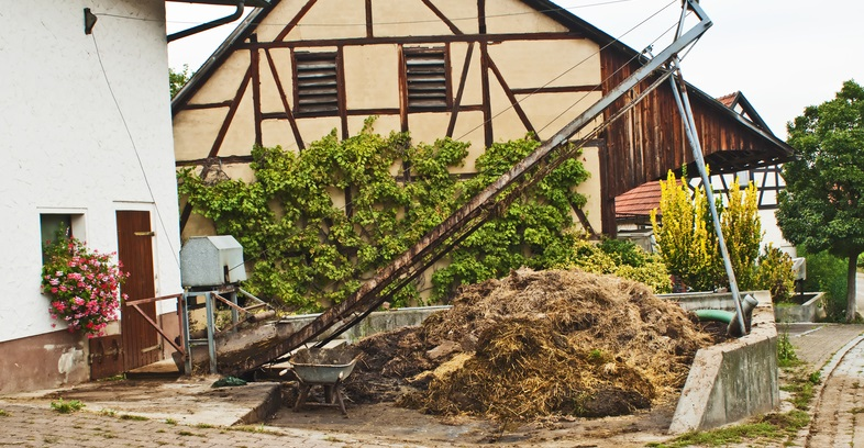 Finland Proposes Horse Manure to Heat Homes