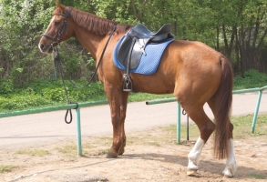 Saddle Fit a Cause to a Problem Horse