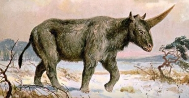 Giant Unicorn Discovery in Siberia