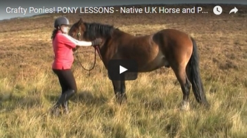 Five Great Pony and Horse Breeds for Kids
