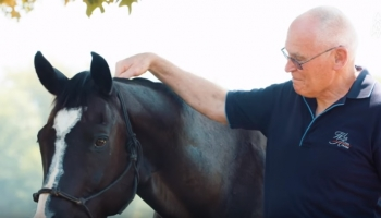 Care Options For Older Horses