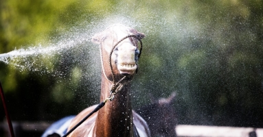What is So Cool About Horse Sweat