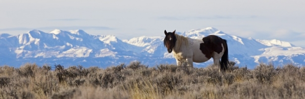 Wild Horses Safe For now