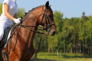 Horse News and Events
