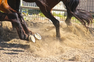 Losing Horse Shoes