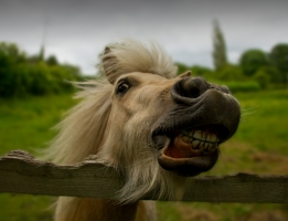 Horse Teeth Myths