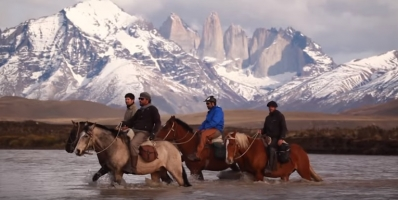 Wild Horses of South America