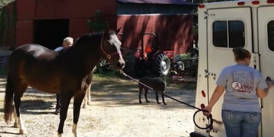Horse Thief Still Attends University After Selling Horses for Slaughter