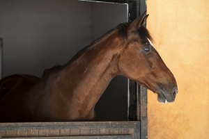 Horse Owners Consider Fire Safety
