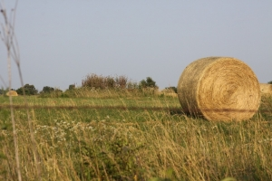 Winter 2019 Hay Shortage