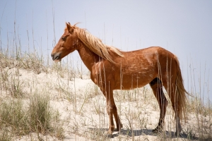 Controversial Wild Horse Senate Bill