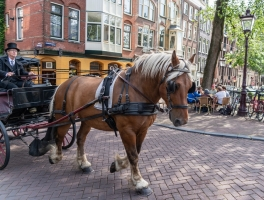 Montreal Carriage Rides End