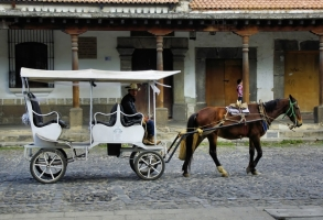 Istanbul Tourist Carriage Horses In Dire Condition