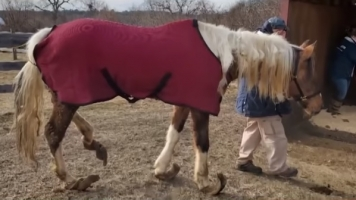 Rescued Horses Had To Be Dug Out of Stalls
