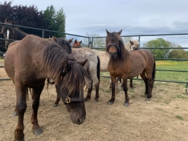 Horse Rescue Races to Save Ponies For Auction Due to COVID-19