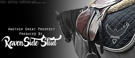 RavenSide Stud TBS Home of Multiple Top Ranked Horses