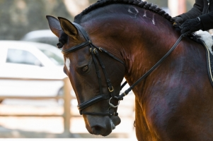 Worsely Dressage Documentary