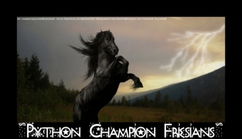 Record Breaking Friesian Earnings