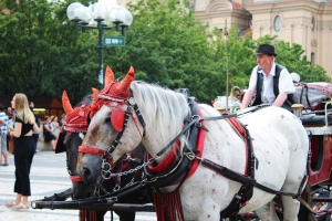 Rome to Ban Horse Carriage Rides