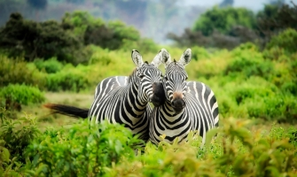 Why Don't We Ride Zebras