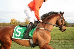 Horseracing Integrity and Safety Act Signed into Law