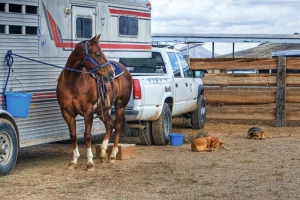 Containing Your Horse While Camping