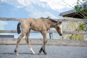 Little Hooves Foal Live Camera
