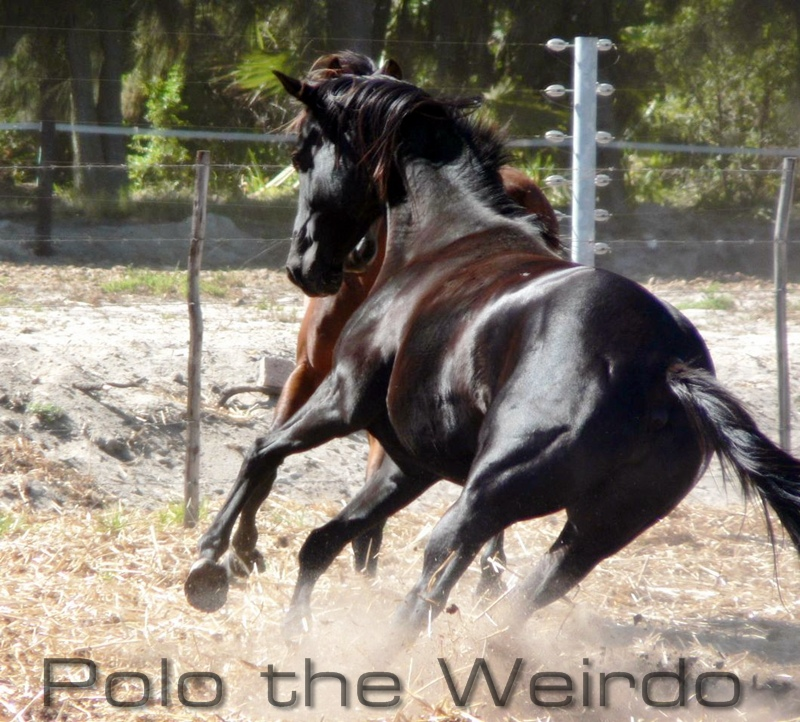 The Story of Polo