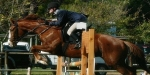 5 June Showjumping Competition